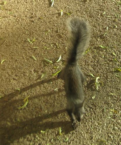 Weird squirrel 002