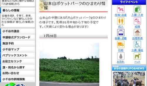 山本山ポケットパークのひまわり情報