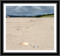 (st jarna) Tags: shells beach nature sand pebble wexford curracloe