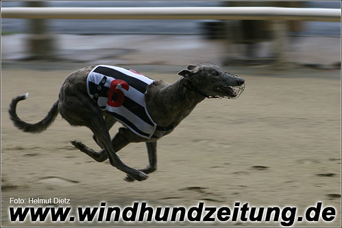 Wimbledon Trial - Greyhound