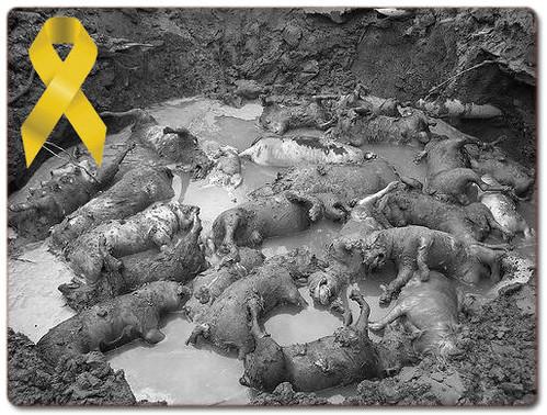 20090812「幫助-推」不會說人話的牠們,悲哀誰人知~牠們也需要幫助!