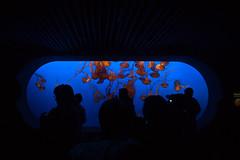 monterey bay aquarium (woolennium) Tags: montereybayaquarium montereyaquarium