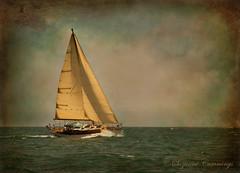 Fantasies of Paradise (SLEEC Photos/Suzanne) Tags: ocean texture beautiful sailboat boat nikon sailing pacific tistheseason d80 memoriesbook thedantecircle artistictreasurechest skeletalmesstexture topcso flickrvault sailsevenseas trolledproud coppercloudsilvernsun imagofabulae