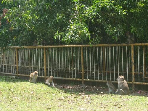 Monos en BSB