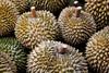 stinky durians (ion-bogdan dumitrescu) Tags: singapore smell durian horrible stinky durians bitzi summer09 mg6632 ibdp findgetty ibdpro wwwibdpro ionbogdandumitrescuphotography