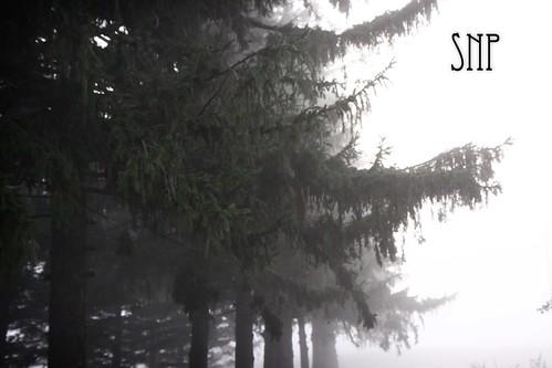 . foggy .
