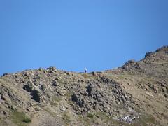 Person heading up towards Buckhorn.