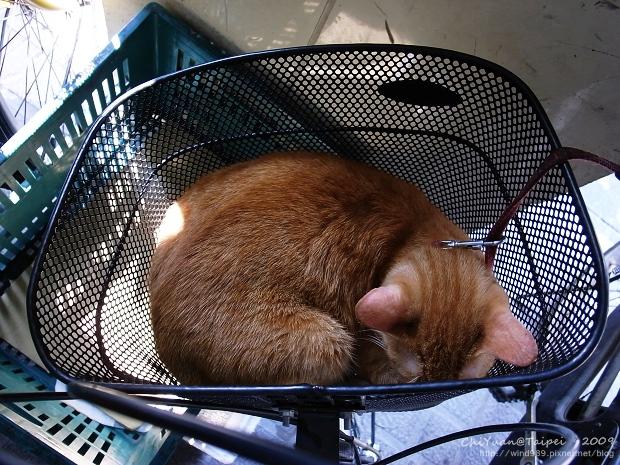 Cat。車籃好睡窩01.jpg