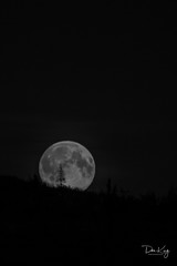 Full Moon Rising (Dan King Alaskan Photography) Tags: moon fullmoon sprucetree sigma80400mm the4elements canon50d skytheme