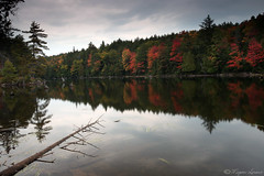 Autumn In Algonquin (Megan Lorenz) Tags: trees lake ontario canada fall nature water colors leaves landscape outdoors rust scenery view scenic whitney getty reds gettyimage algonquinprovincialpark singhray the4elements meganlorenz mlorenzphotography hpcfallcolours