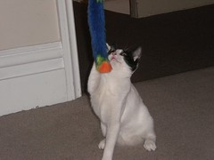 Spotty is not sure (cox-on-the-box - art, clay, cats, veg) Tags: catnipaddicts