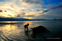 DSC_0980 (Johnny Siahaan) Tags: travel sunset heritage nature water beautiful sunrise sumatra indonesia photo amazing asia tour photos stockphotos batak toba bestshot danau wisata laketoba stockphotography sumatera travelphotos supervolcano samosir huta kerbau gembala beautifullandscape photostock danautoba sumaterautara sellphotos nikond90 tobalake interestinglandscape indonesianphotographer sumatratravel visitindonesia fiveprime pestadanautoba horbo nikond5000 visitsumatra johnnysiahaan kawasandanautoba orangbatak wisatadanautoba sumatratourism northsumatratourism sumatraecotourism fotodanautoba photodanautoba