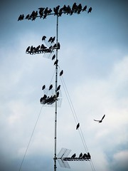 how many birds on an antenna? (MartinodF) Tags: sky bird birds flock uccelli cielo migration stormo migrazione