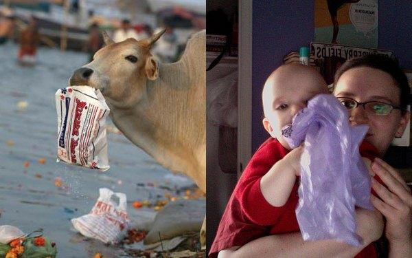 Animais comem sacolas plásticas