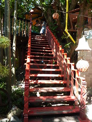 The stairs heading in to Tree Tanic.