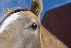 17 (Garzilly) Tags: thanksgiving horses oklahoma hunting westville