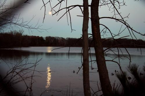 ducks in the moonlight