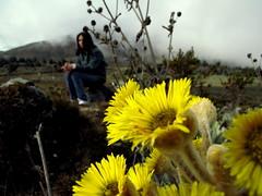 Frailejon & Daniela (OjO de oripopo) Tags: flowers mountains flores venezuela merida andes sierranevada paramount montanas paramo losandes frailejon frailejones