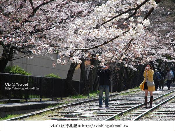 【via京都賞櫻行】鐵道上的櫻花美景~蹴上鐵道7