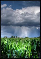 Mais .... and a nuclear storm (2) (alfvet) Tags: sky colors clouds corn cornfield nikon nuvole ngc cielo sensational hdr vigevano d60 blueribbonwinner abigfave anawesomeshot aplusphoto flickraward theunforgettablepictures platinumheartaward theperfectphotographer thesuperbmasterpiece veterinarifotografi multimegashot nikonflickraward 100commentgroup cloudslightningstorms platinumbestshot platinumpeaceaward magicunicornverybest tripleniceshot aboveandbeyondlevel1 flickrstruereflection1 flickrstruereflection2 flickrstruereflection3 flickrstruereflection4 flickrstruereflection5 flickrstruereflection6 flickrstruereflection7 rememberthatmomentlevel1 rememberthatmomentlevel2