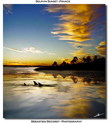 Dolphin Sunset - France - Corsica (sdecoret) Tags: light sunset sea sky blackandwhite cloud mer moon white lake storm black reflection bird water yellow photoshop jaune lune canon island star graphicdesign photo eau noir noiretblanc earth dolphin corse space corsica picture lac ile halo reflet ciel adobe planet terre nuage dauphin blanc oiseau etoile hdr espace lightroom couchedesoleil p1f1 canoneos450d colourartaward platinumheartaward psdtuts photoshopcs4 abduzeedos deviantartdeviant graphiccreation