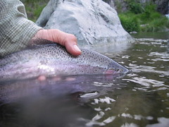 Releasing a McCloud Dry Fly