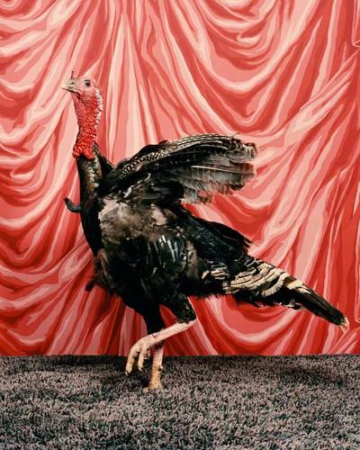 turkey1FLAT