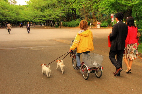 Walking the pets at Ueno Park