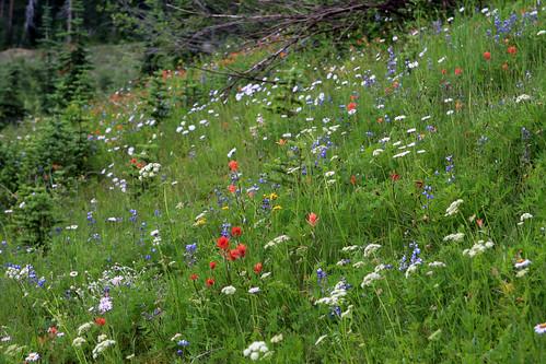 Mt. Ranier wildflowers