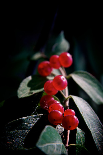 Berry Path