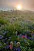 Mount Rainier - 2009 (Jesse Estes) Tags: sunrise mountrainier wildflowers paintbrush lupine 1635ii 5d2 jesseestesphotography