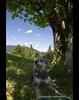 in the shadow (mcPhotoArts™) Tags: shadow sky dog chien tree clouds germany bayern deutschland bavaria break meadow wiese himmel wolken perro hund cachorro pause schatten soe baum garmischpartenkirchen geotagging hütehund coth eckbauer bergerpicard kartpostal bej bergerdepicardie mywinners canoneos400d impressedbeauty platinumheartaward sigma1770mm2845dcmacro ©bumblebeephotografix ffgapashow