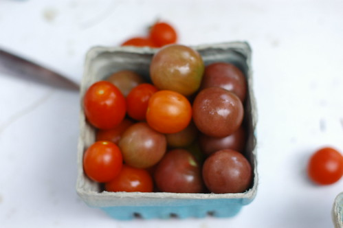 soft-focus tomatoes