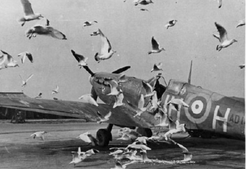 Warbird picture - 303 squadron RAF SPITFIRE