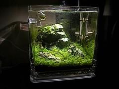 Tropica Aquacube planted Iwagumi - 6-9-09 (Stu Worrall Photography) Tags: stone aquarium ada tank aquascape tropica planted hardscape seiryu stuworrall iwagumi aquacube ukaps ukapsorg
