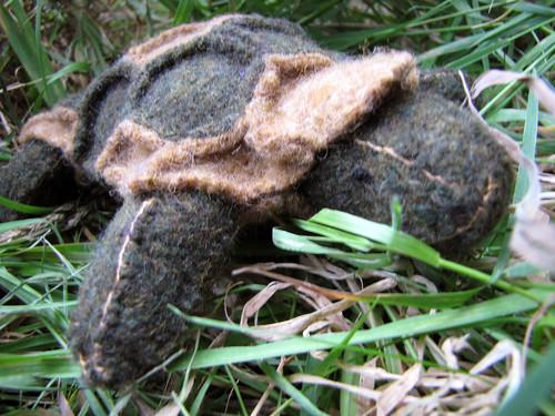 John Tortoise (5)