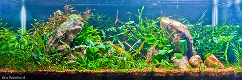 20L Aquascape