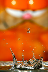 Waterdrop cat (kees straver (will be back online soon friends)) Tags: orange flower macro green nature water rain closeup cat leaf drop droplet splash keesstraver