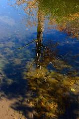 水中に枝を広げる