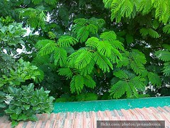 Greenery After Monsoon In Ahmedabad 5