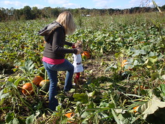 Exploring The Pumpkin Patch