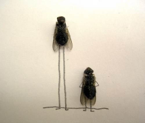 dead-flies-art-12