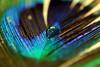 14/31  -  تَآريخْ قديمْ من سنةْ أقدمْ (F A 6 O M `✿) Tags: color art canon drop 100mm fofo riyadh ksa d400 fa6om fa6omphotography✿s