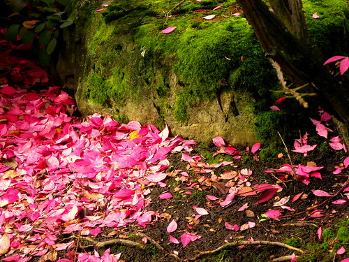 Flame Bush Leaves and Moss