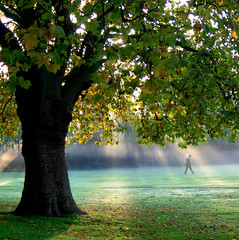 Off to School in the Mist 2 (Andrea Kennard) Tags: life park wood uk morning blue school autumn boy summer people mist plant tree male green london fall nature smile grass yellow fog season children landscape fun outdoors happy gold dawn leaf kid spring student education funny child natural outdoor walk background young fresh environment rays sunbeams enfield updatecollection ucreleased albanyparkenfield