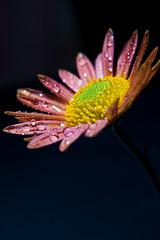 Autumn flowers No1