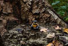 Day 328 - WALL-E by a Tree Stump (cappndave) Tags: autumn tree fall nature leaves forest toy robot woods sony stump treestump walle oneobject365daysproject sonya200