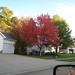 2009-10-20 Beautiful Tree in Our Yard