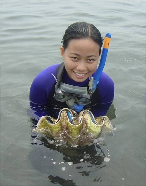 Tridacna Gigas or giant clams