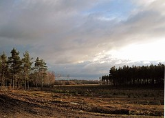 New Forest I (farmerytwang) Tags: uk trees clouds skies hampshire newforest deerleap
